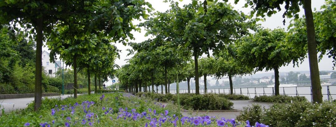 Rheinuferpromenade in Bonn-Beuel