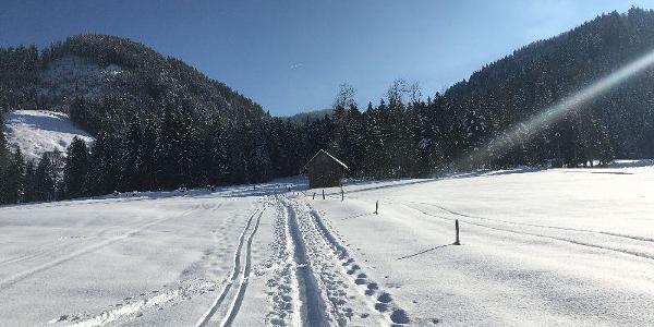 Kurz nach dem Start in Alpthal.