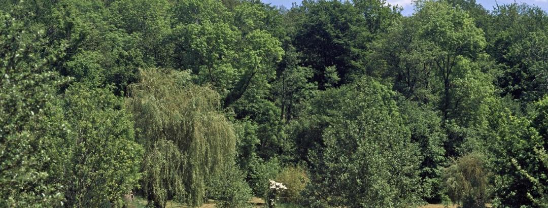 Ruiseau du Moulin