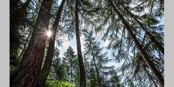 Themenweg Schutzwald