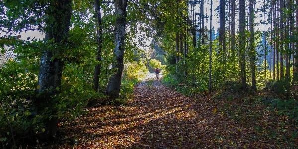 Im lichten Buchenwald von Feistritz im Rosental unterwegs