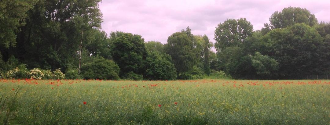 Sommerstimmung in der Urdenbacher Kämpe