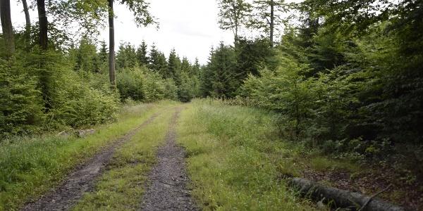 Buchenalthölzer und Nadelwälder
