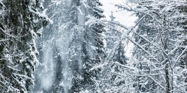 Winterwandern am Crestasee