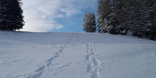 Schneeschuh-Runde am Brandkogel_Schneespuren