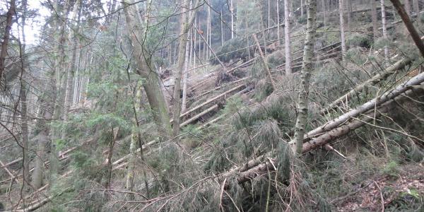 Winterverwüstungen im Polenztal, kurz hinter der Waltersdorfer Mühle