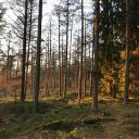 Sennewald im Sonnenuntergang