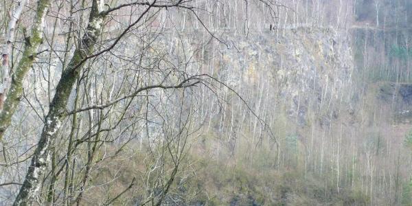 Faszinierender Blick in die große Grube 7, in der nach dem ehemaligen Kalksteinabbau nun etliche Bäume wachsen