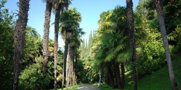 The Arboretum (Parco Ardiducale)
