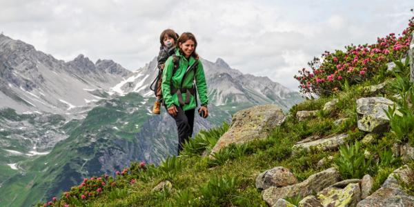 Im Frühsommer blühen die Alpenrosen