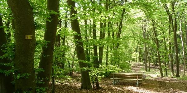 Riedenburger Rundwanderweg Nr.11