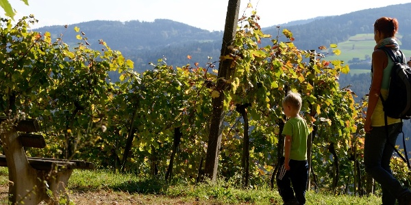 Wandern entlang der Weingärten