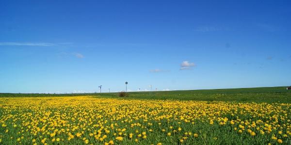 Felderlandschaft in Carolinensiel