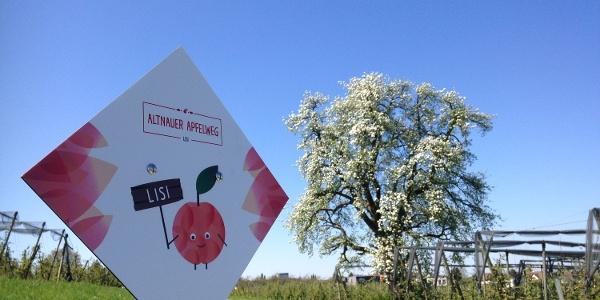 Der Apfelweg in Altnau lehrt auf Infotafeln interessantes über den Apfelanbau im Kanton