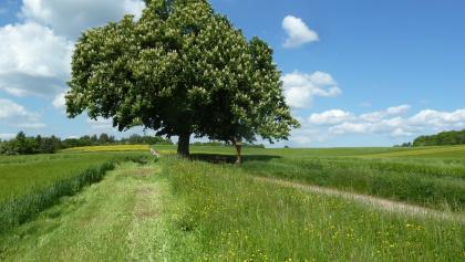 Der Wegverlauf bei Calw-Stammheim führt durch offene Wiesenlandschaften