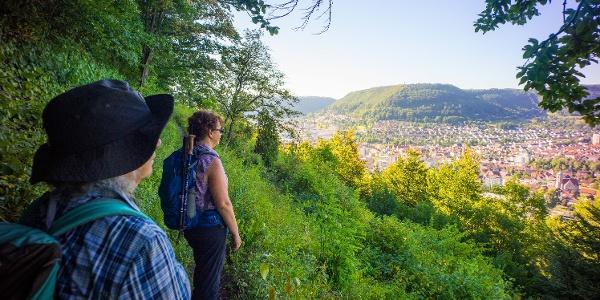 Panoramaweg am Geislinger Tegelberg, Abschnitt des Albtraufgängers