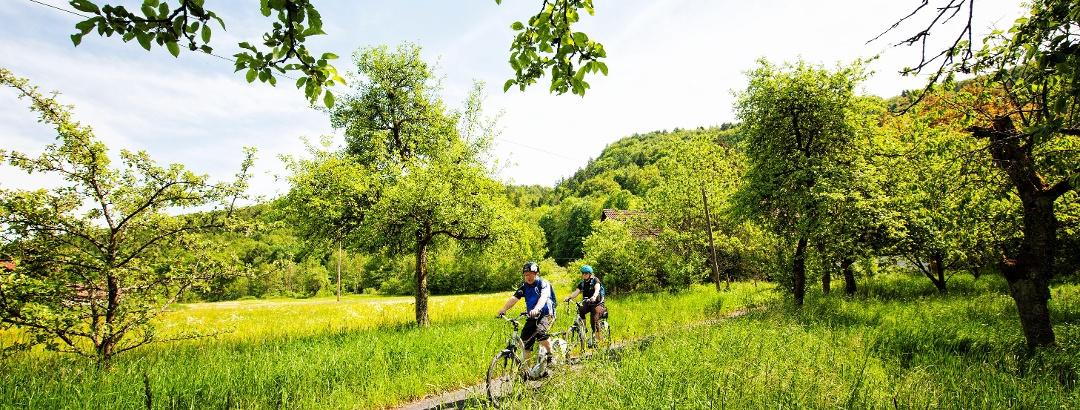Gut ausgebaute Wege auf dem Radrundweg