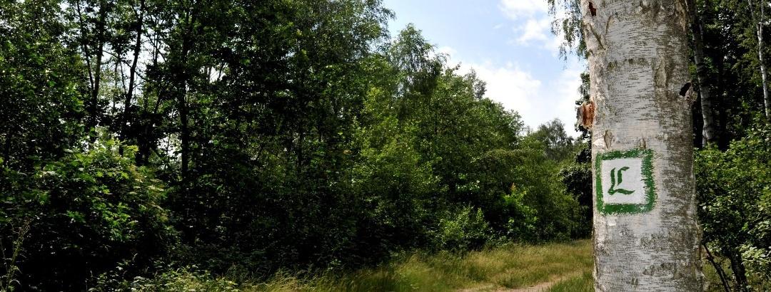 Lutherweg durch Sachsen
