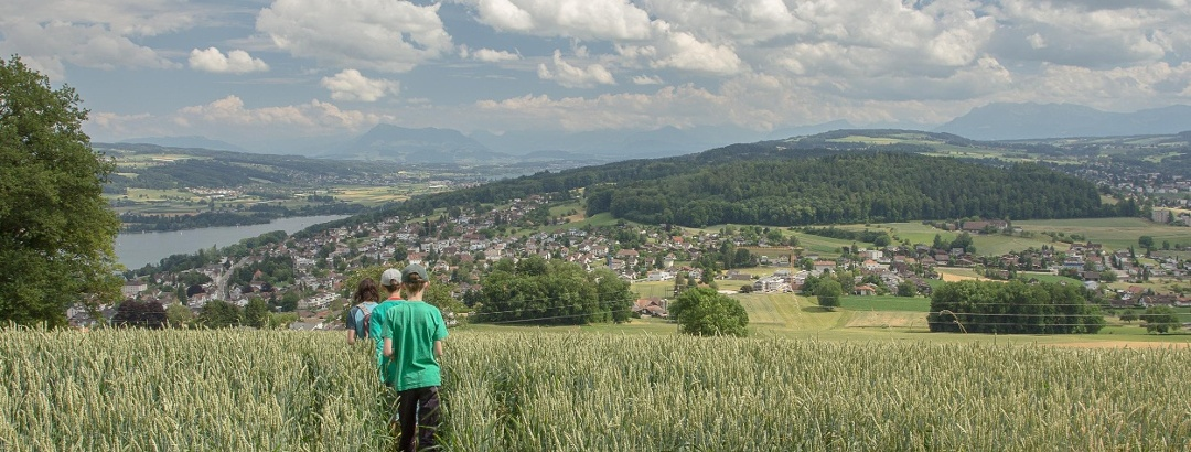 Kann auch passieren: Wanderweg durchs Getreidefeld (doch, ist offiziell)