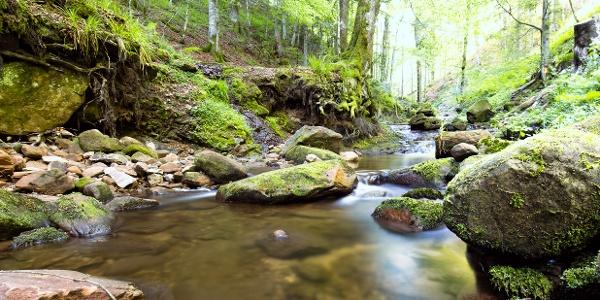 Das Ufer der Wilden Rench, erster Teilabschnitt des Wiesensteigs