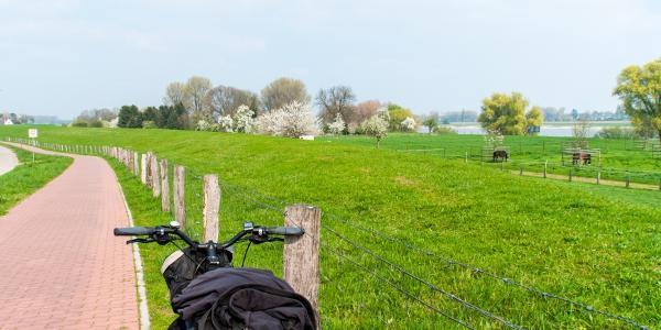 Die gruenen Rheinauen zwischen Düsseldorf und Uerdingen