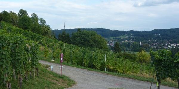 Wanderweg im Weiler Rebberg