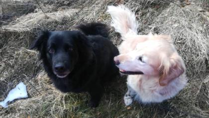 Glückliche wohlerzogene Hunde