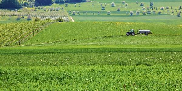 Landwirtschaft bei Magden.
