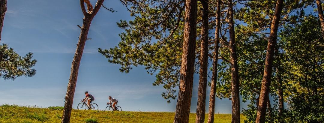 'Radfahrer zwischen Wiesen und Kiefern in Thiessow auf der Halbinsel Mönchgut