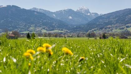 Frühling im Chiemsee-Alpenland, Blick auf den Wendelstein von Bad Feilnbach aus