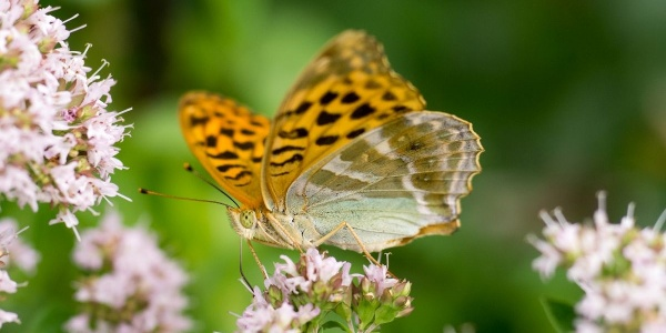 Flora und Fauna Traufgang Wiesenrunde