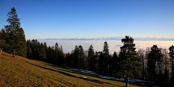 Alpenpanorama auf dem Weg zum Hinterweissenstein.
