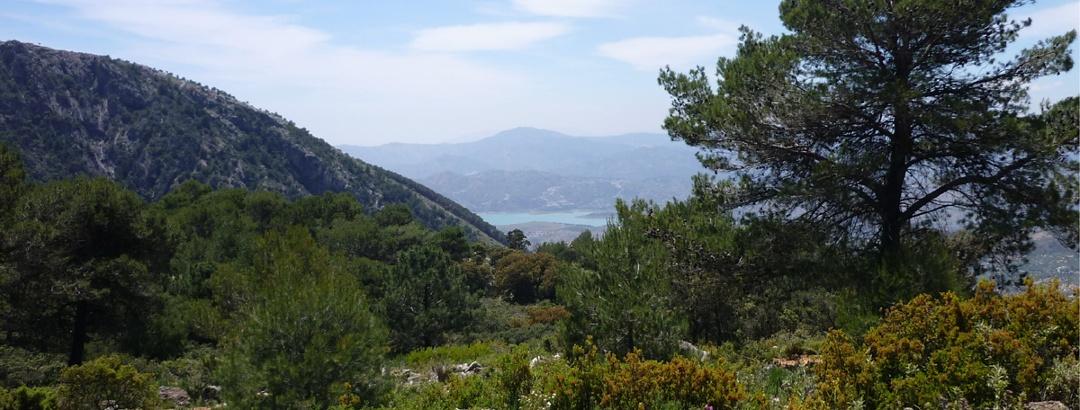 Típica vista a la naturaleza en una de las caminatas en Andalucía