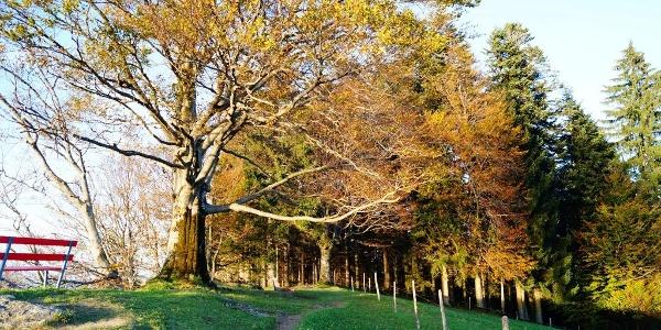 Der Brüggelekopf im Herbst