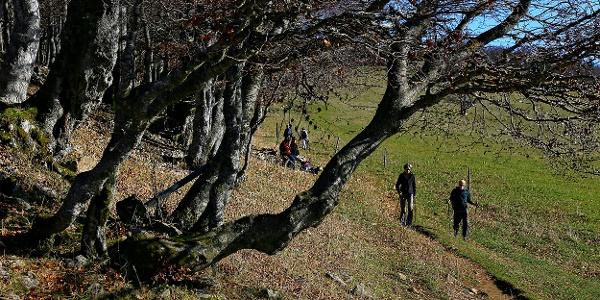 Wanderweg auf dem Weissenstein
