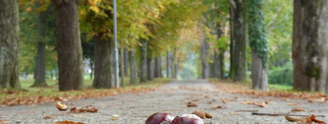 Herbst in Schwanberg