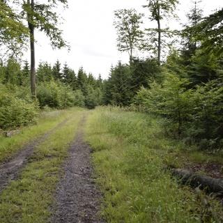 Buchenwälder im NSG Apollmicke und Einsiedelei