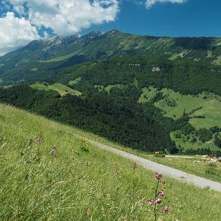 Prà Alpesina