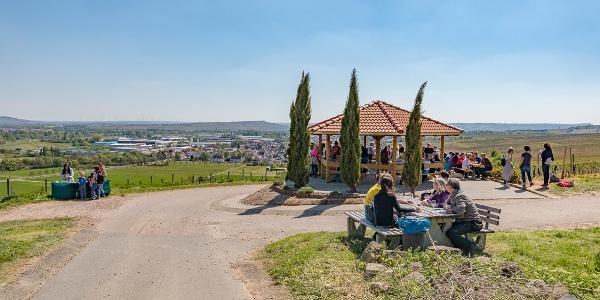 Weingenuss in den Weinbergen bei Langenlonsheim