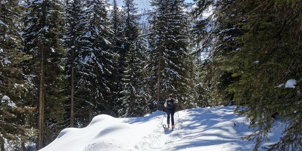 Bei der Alpe Nuova