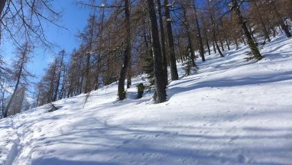 Aufstieg im Lärchenwald