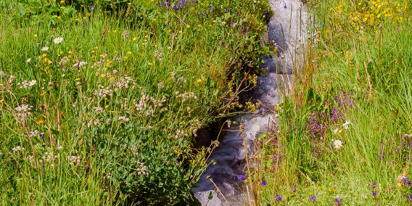 Bergwasser Rosswald