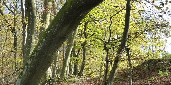 Waldrandpfad an der Mehringer Höhe