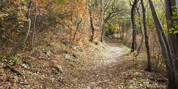 Autumn colors on the first part of the path on Monte Taglio di Sarca