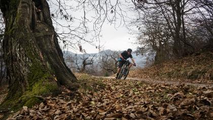 La forestale fra i castagni a inizio marzo (Drena)