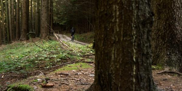 The forest to Carobbi