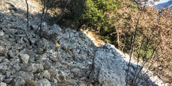 Ein Beispiel des Terrains auf dem 409B Trail