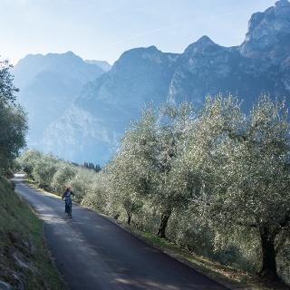 Der Aufstieg auf den Monte Brione zwischen den Olivenbäumen mit dem Gardasee im Hintergrund