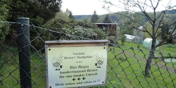 Bienen am Kammweg beobachten - Neuhausen