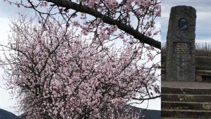 Mandelbäume und König Luitpold-Denkmal am Anfang des Weges